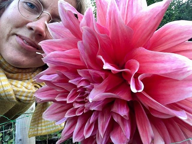 Been at Fern Verrow learning about biodynamic farming. Dahlias as big as uour head! 🌺Now I'm back in town and ready to yoga with you! 🌺Tuesdays and Thursdays 7-8pm Wednesday's 9.30-10.30am 🌺Some spaces left on the 29th of October for an evening of yin, candlelight and harp 🌺Get in touch for private classes