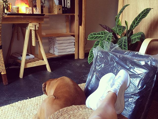 Quiet day off listening to relaxation music with George our boxer keeping me company in the studio. Day of restocking, cleaning and putting in new furniture. WOOP! . . .#fungshway #quiet #calm #selflove #peace #change #redecorate #revamp #boxer #mansbestfriend #doglover #company