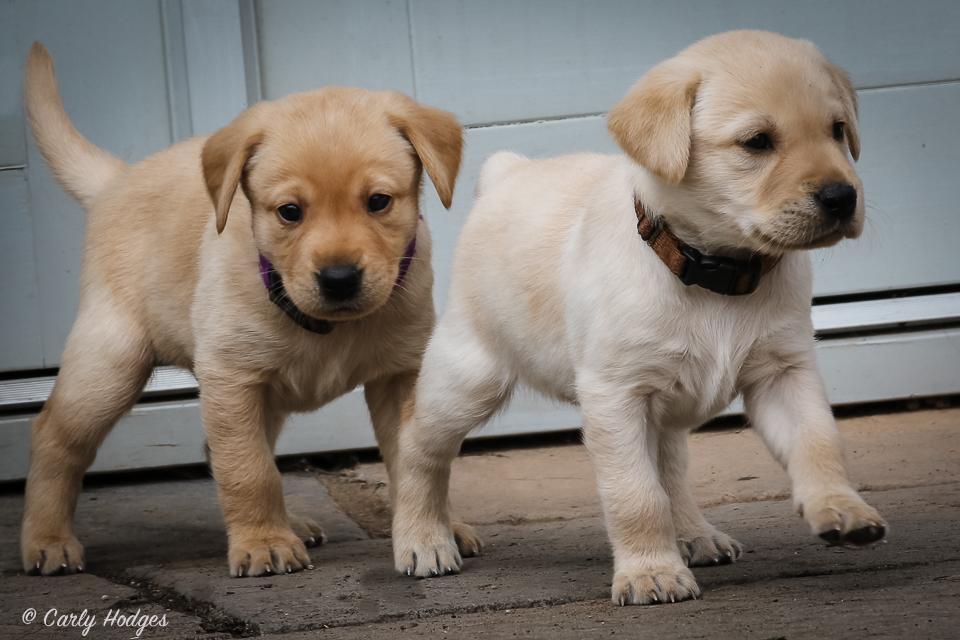 Lupridge Puppies Low Res Web-19.jpg