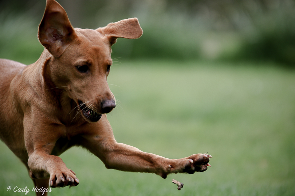 Lupridge Puppies Low Res Web-84.jpg