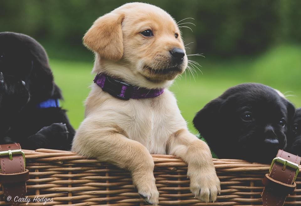 Lupridge Puppies Low Res Web-62.jpg