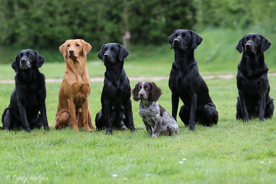 Lupridge Puppies Low Res Web-93.jpg
