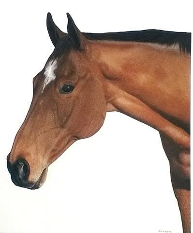 Cris' horse.jpg