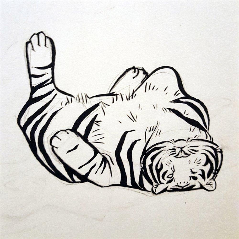 Copy of Tiger sketch