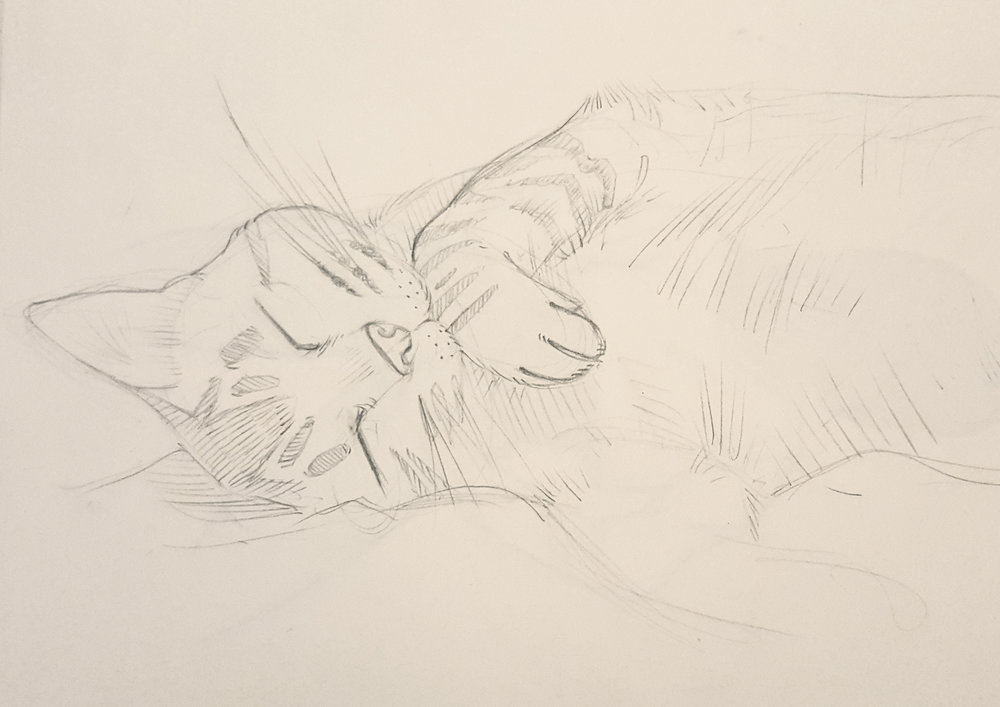 Copy of Sleeping Cat sketch