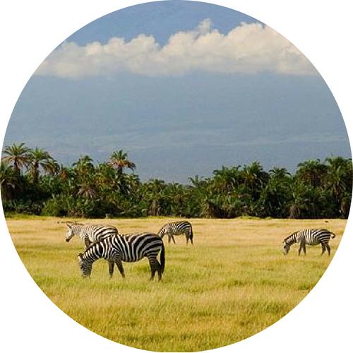 Tanzania *