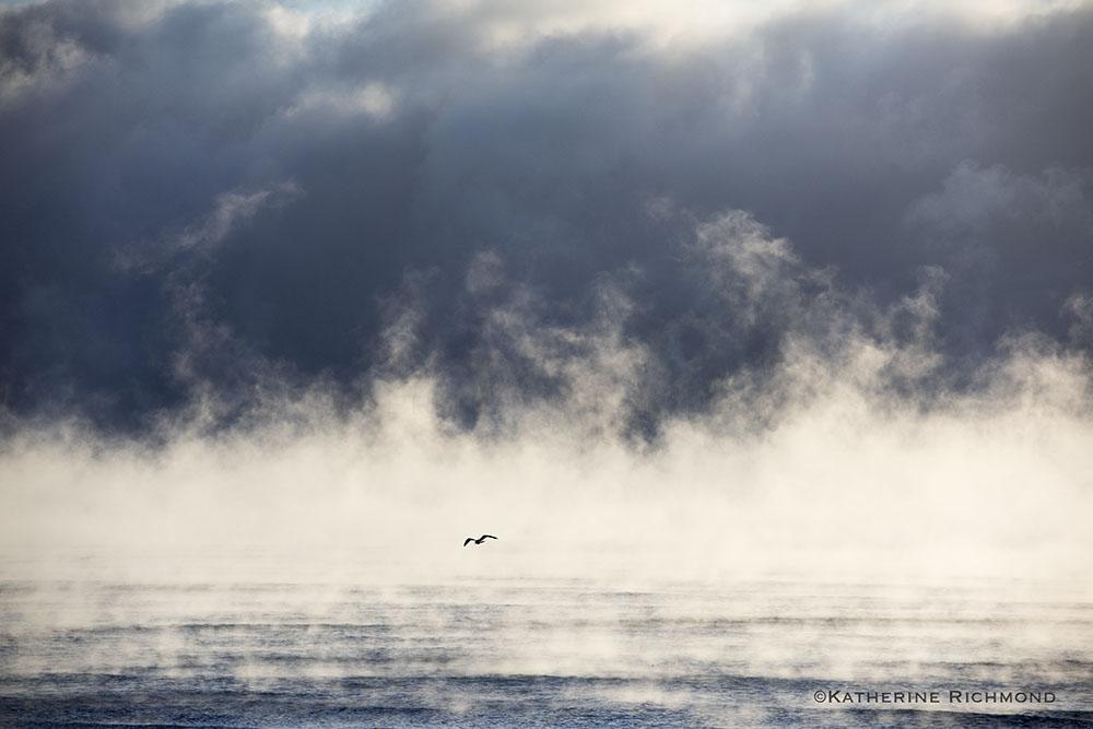 SEA SCAPES — KATHERINE RICHMOND | title