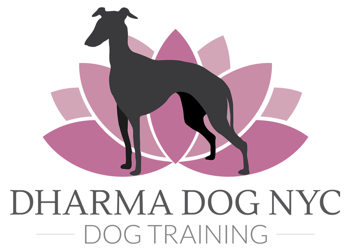 Dharma Dog NYC - Dog Training