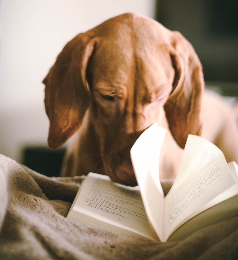 Good Reads - learning more about your companion