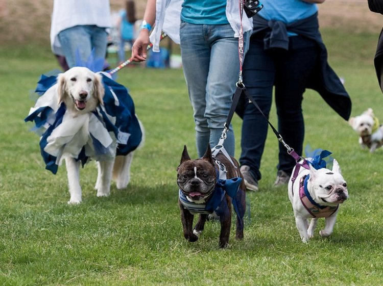 photo-petparade-parade.jpg