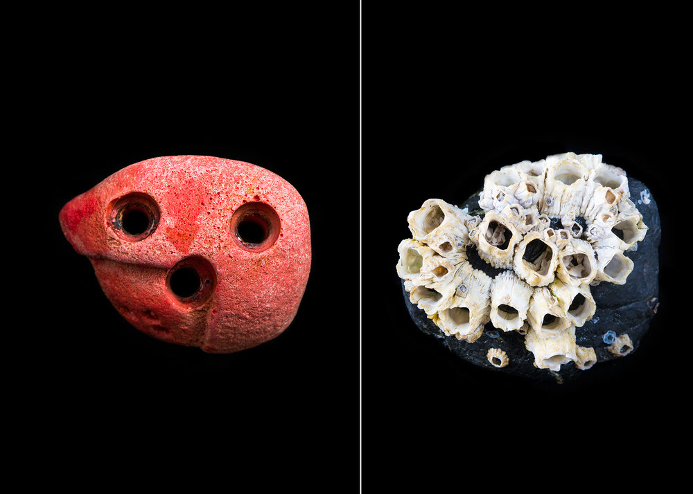A bright red rock climbing hold is made from polyurethane, a hard and durable type of plastic. Barnacles grip tightly to a smooth rock found in a tide pool.