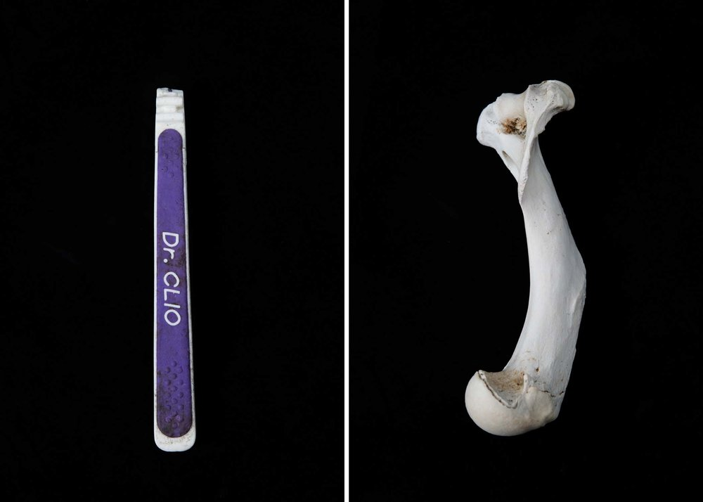 """The purple handle of a toothbrush has the words, """"Dr. Clio,"""" printed on the side. The toothbrush comes from Dr. Clio, a Korean company that manufactures and distributes toothbrushes worldwide to the U.S., Canada, Europe and Australia. A weathered bone shows the passage of time."""