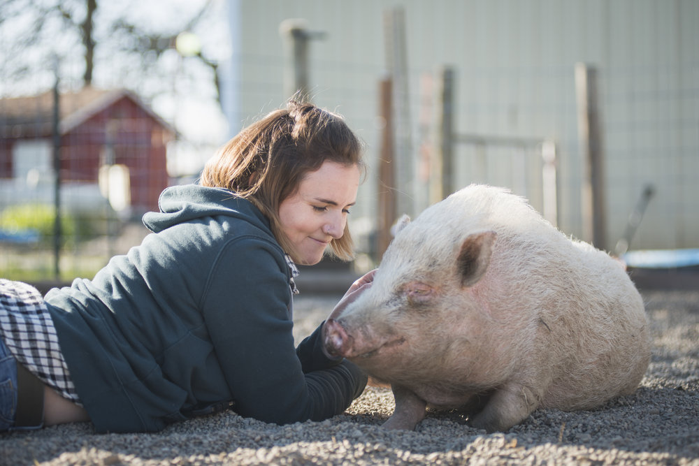 Gwen Jakubisin, Executive Director of Lighthouse Farm Sanctuary, lies down with a pig that was rescued from a research facility that performed traumatic wound testing. Now the pigs live on the sanctuary with 200 other animals.