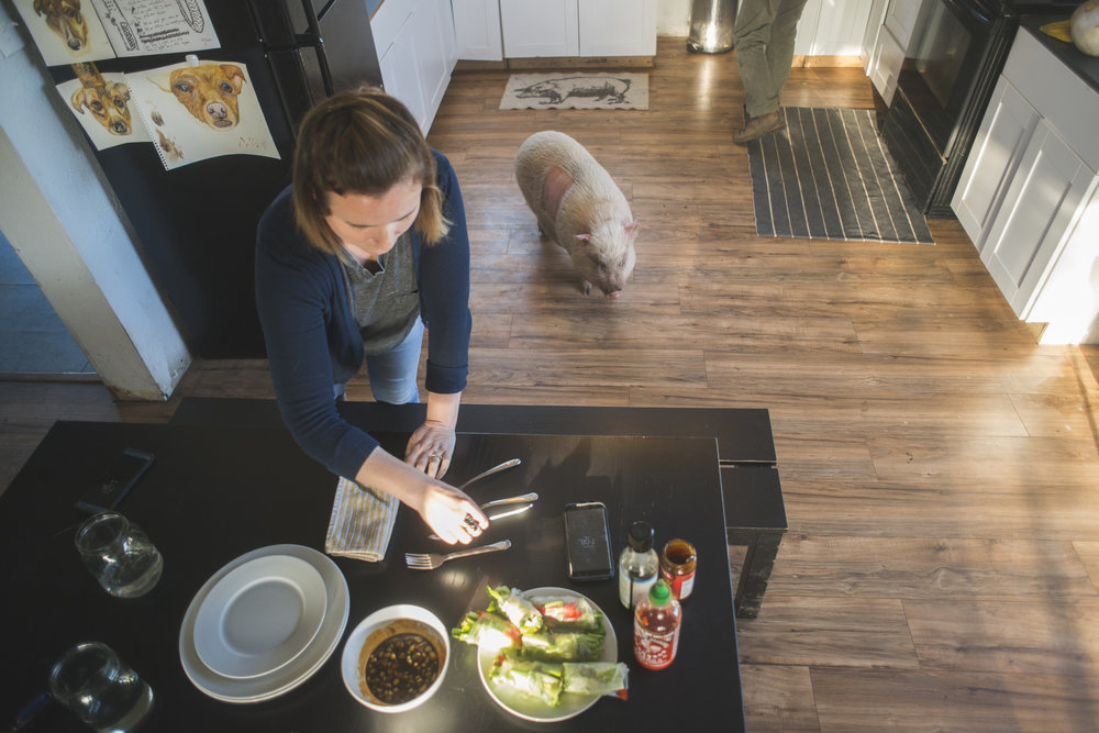 Emma the pig recently suffered a health problem and was rushed to Oregon State University for treatment. While she is on the mend, Emma lives in the Jakubisin house and has free reign over the kitchen.