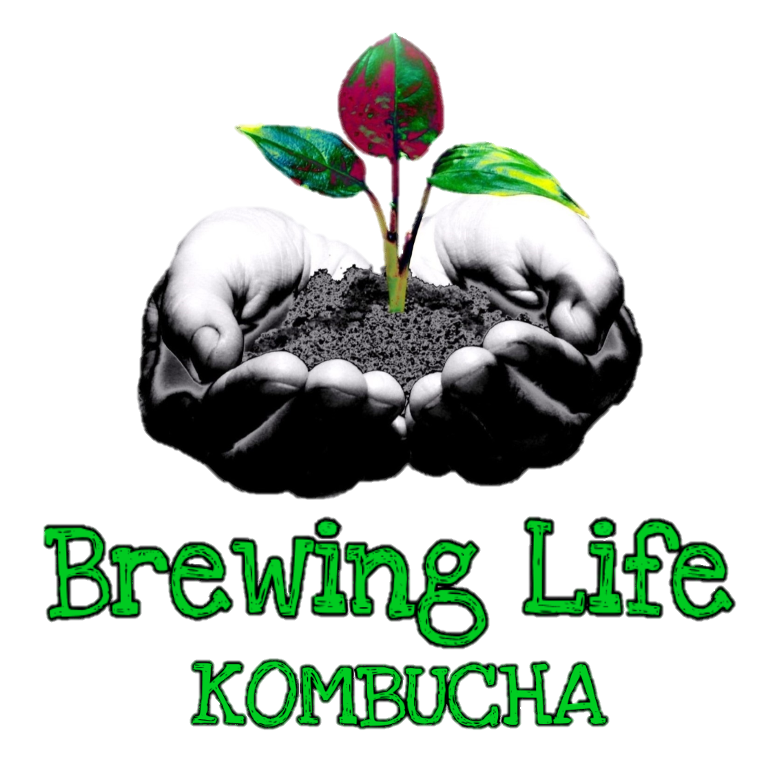 Brewing Life Kombucha