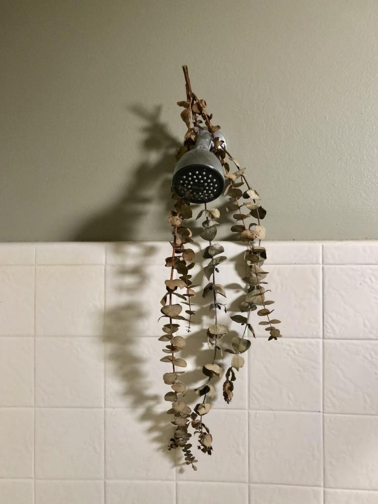 shower dried eucalyptus.jpg