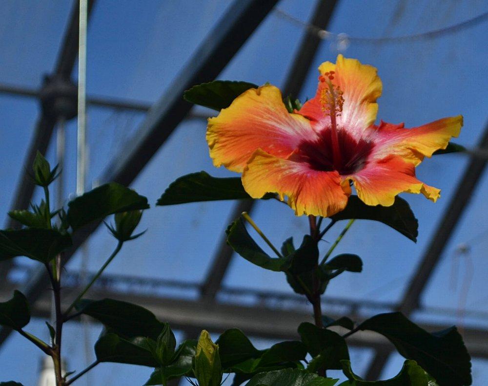 5 stunning edible flowers ko systems smart micro greenhouses izmirmasajfo