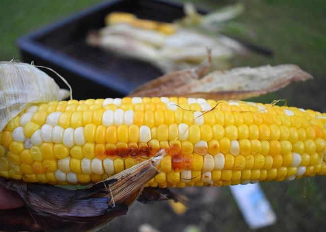 Did you know? 💡Corn is Everywhere!  Around 1/4 of items in the grocery store contain corn in some form.  There are over 3500 uses for corn, for example in the production of #matches, #plastics, #soaps, #batteries, and #explosives! 🌽🍿🔋💣