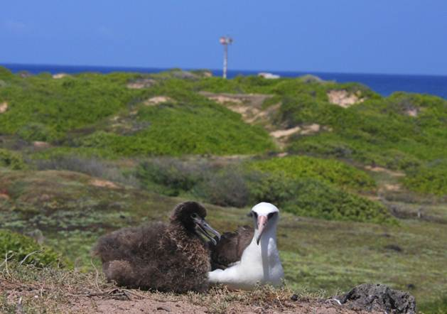 1.-Albatross-and-chick.jpg