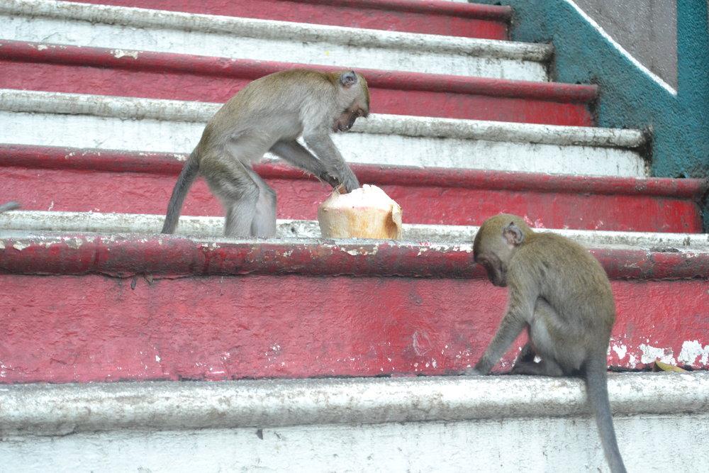 MonkeyBusiness2AaronAU