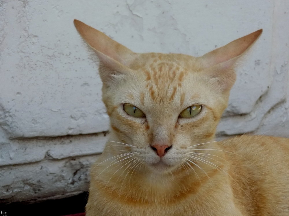 cat buddha temple wat pho thailand