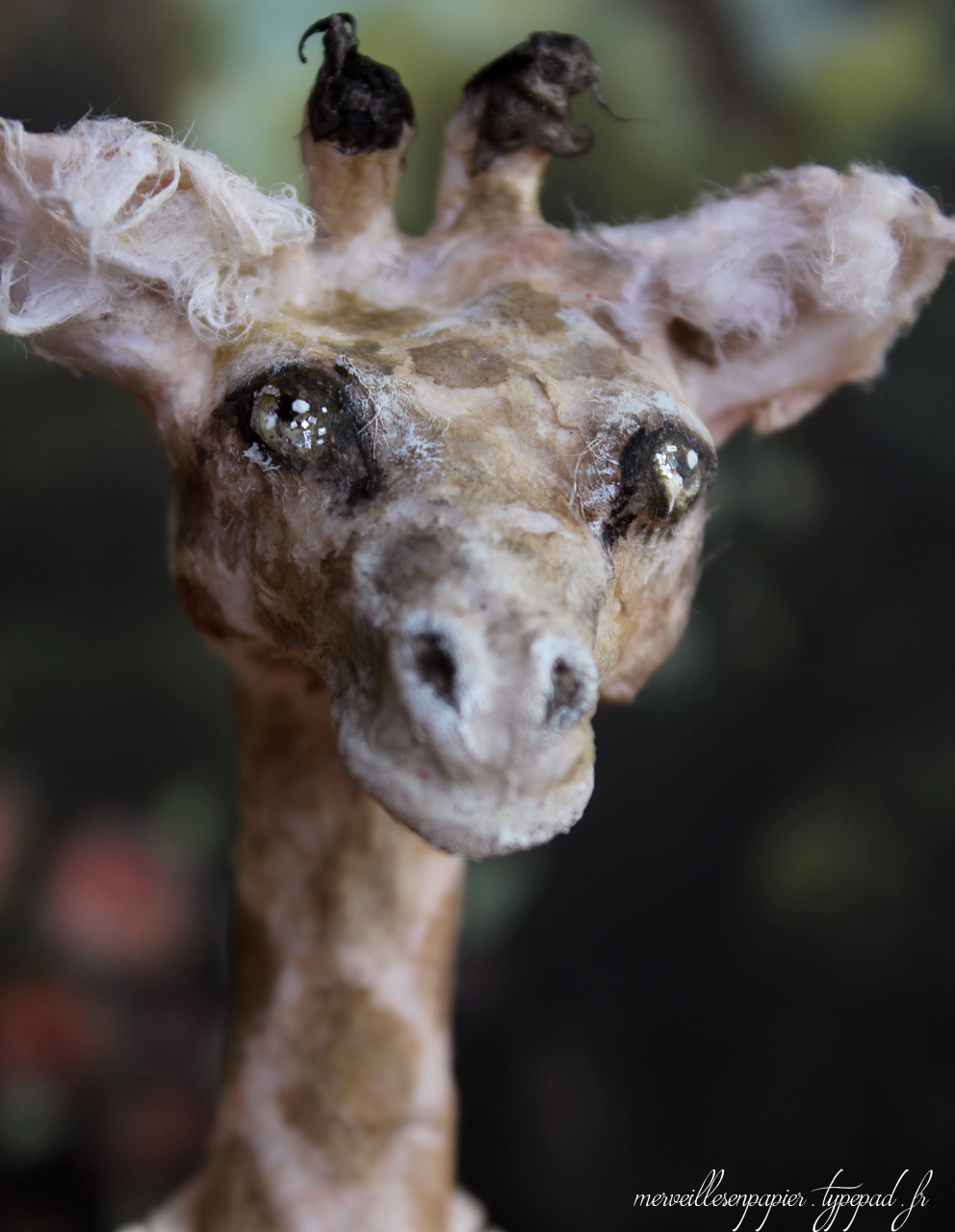 girafe-4.jpg