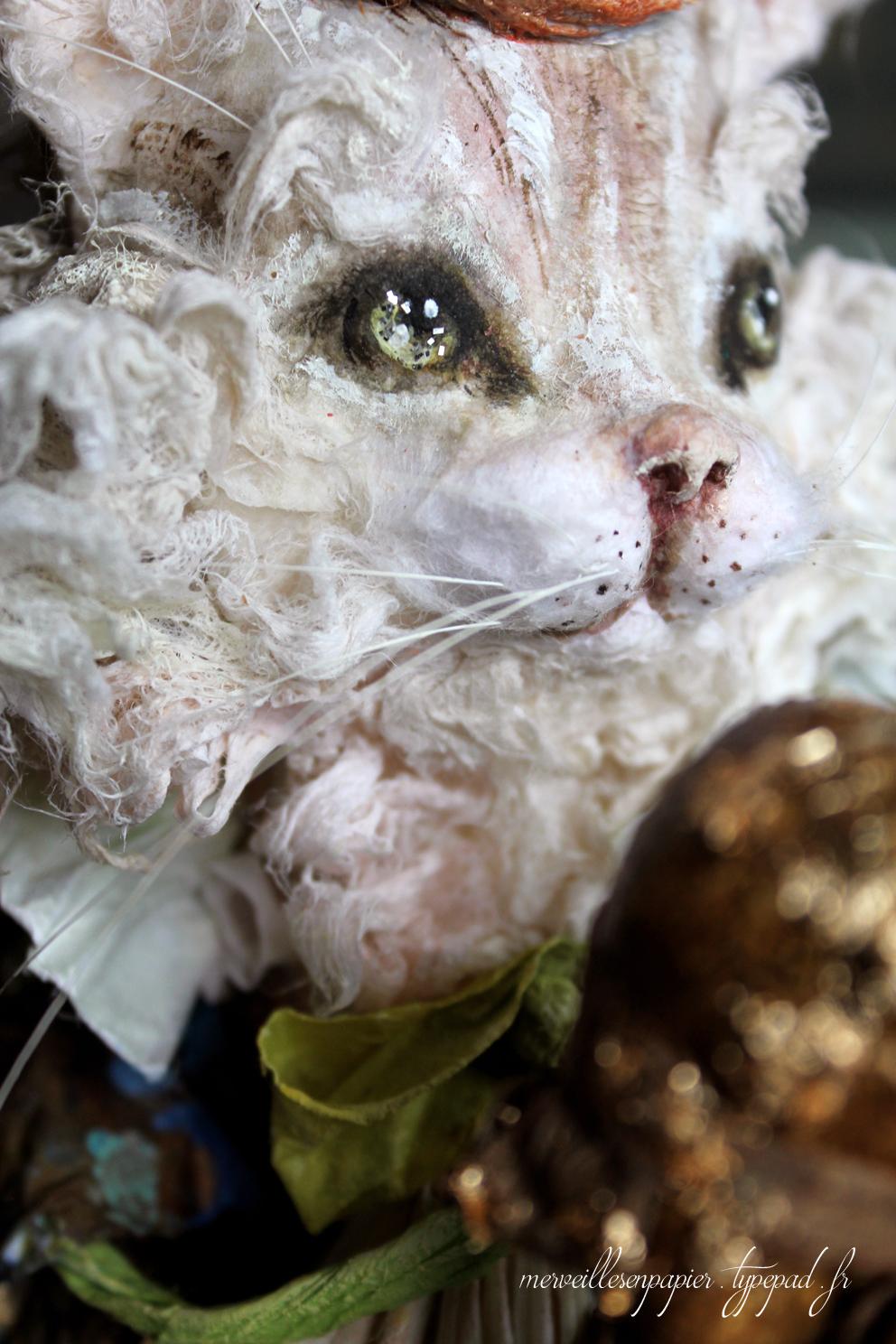 roi-chat-15.jpg