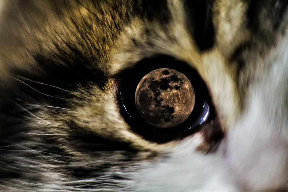 Cat moon eye.jpg