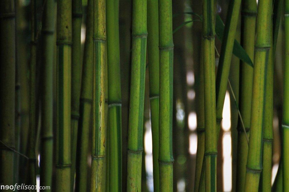 Nature web wm s26.jpg