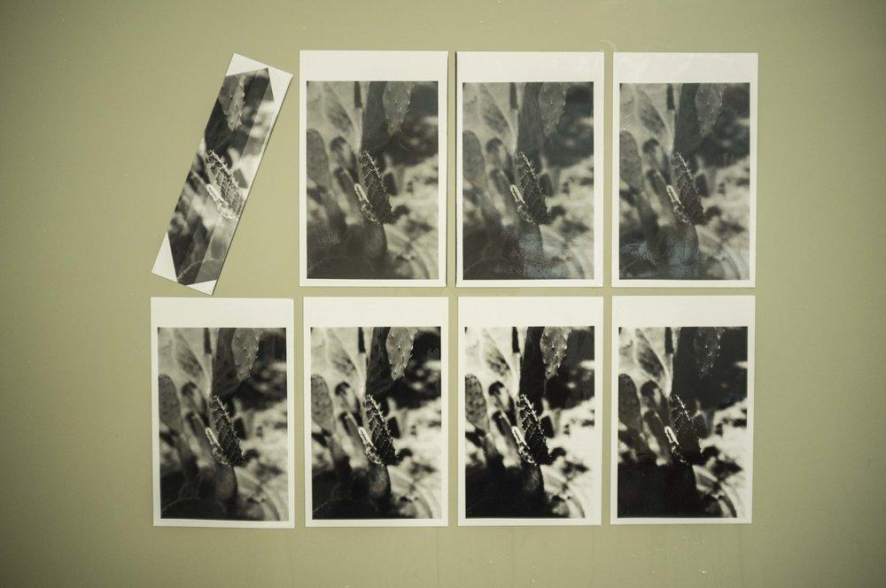 First Prints.jpg