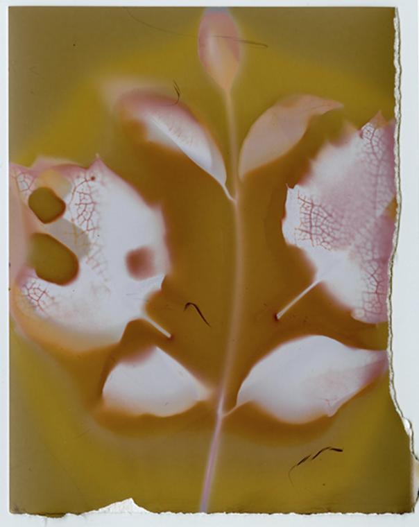 Lumen 1 crop.png