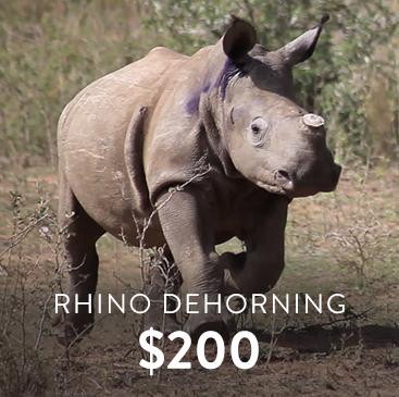 _0003_rhino dehorning.jpg