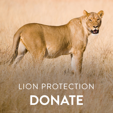_0006_lion protection.jpg