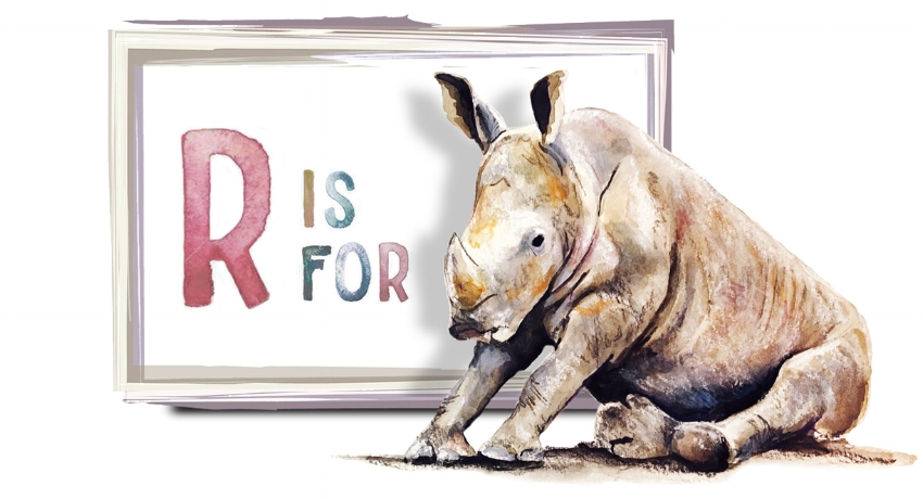 rhino_day3.jpg
