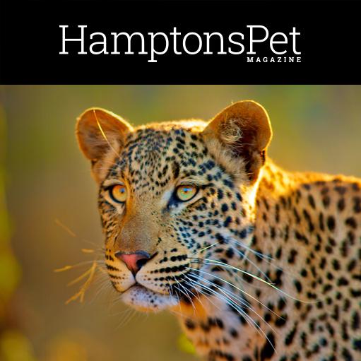 _0012_hamptons-pet.png