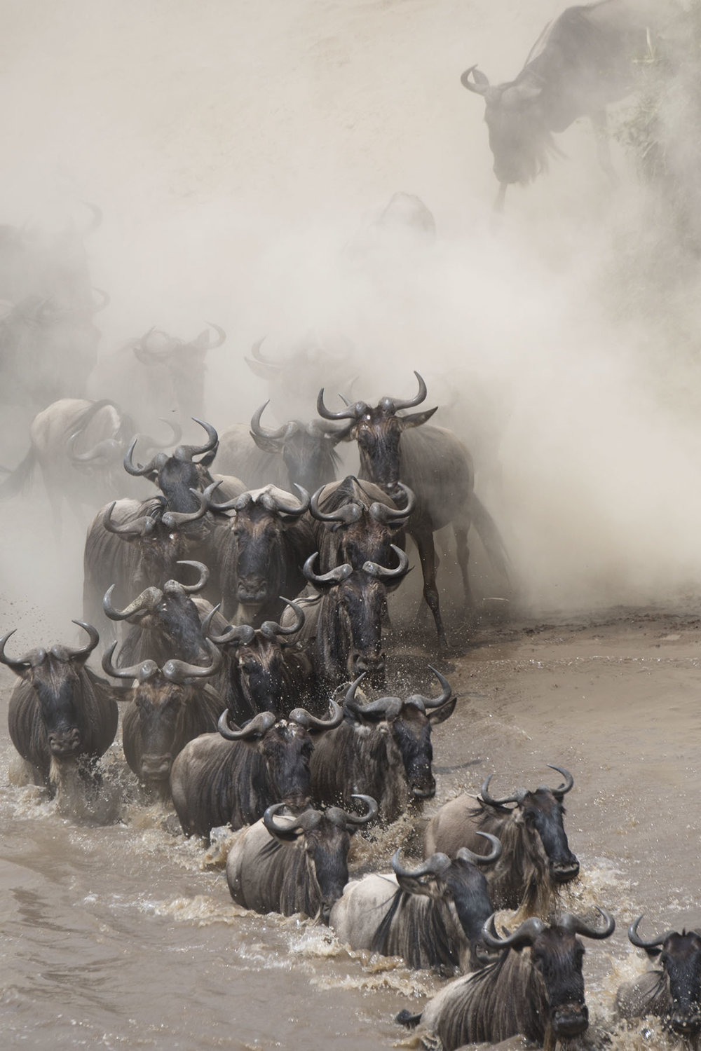 The wildebeest migration, Kenya 2017.  Photo credit: Nadja Rutkowski, Le Petit Grand Films.