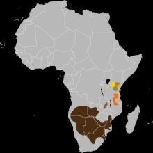 Wildebeest range in Africa, with the blue wildebeest range in shown in brown.  Source: Wikipedia