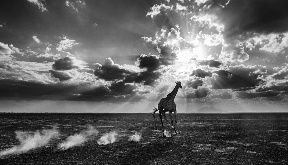 Heaven Can Wait II. Amboseli, Kenya 2014. David Yarrow Limited Edition.