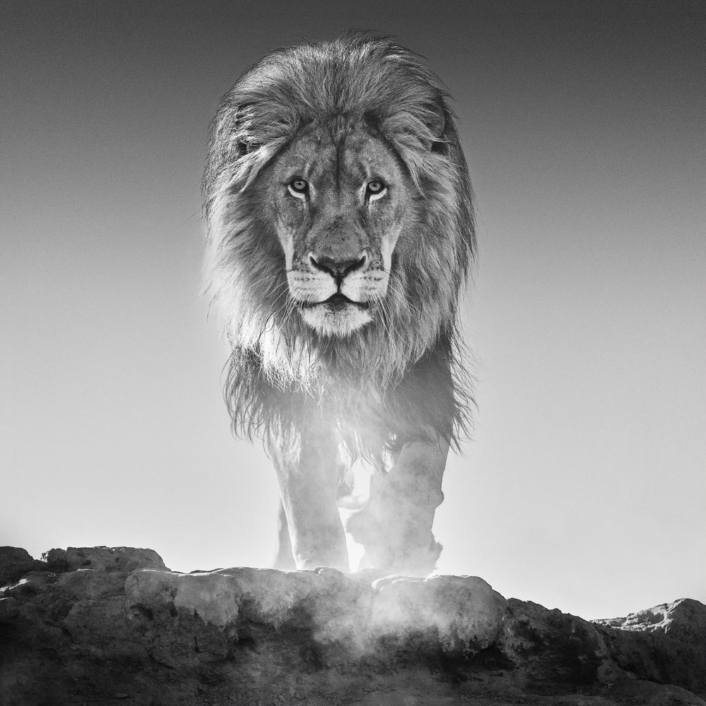 The Old Testament, Dinokeng South Africa 2017. David Yarrow Limited Edition.
