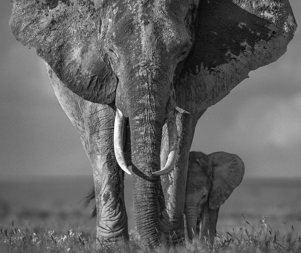 The Walk of Life, Amboseli Kenya 2018. David Yarrow Limited Edition.