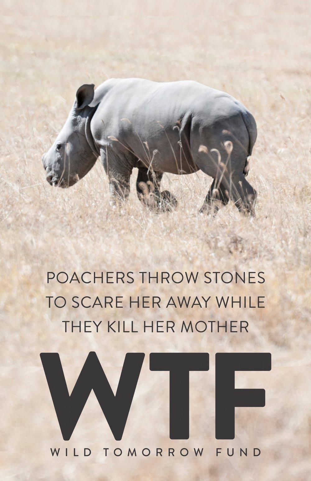 WTF poster_0004_baby rhino.jpg