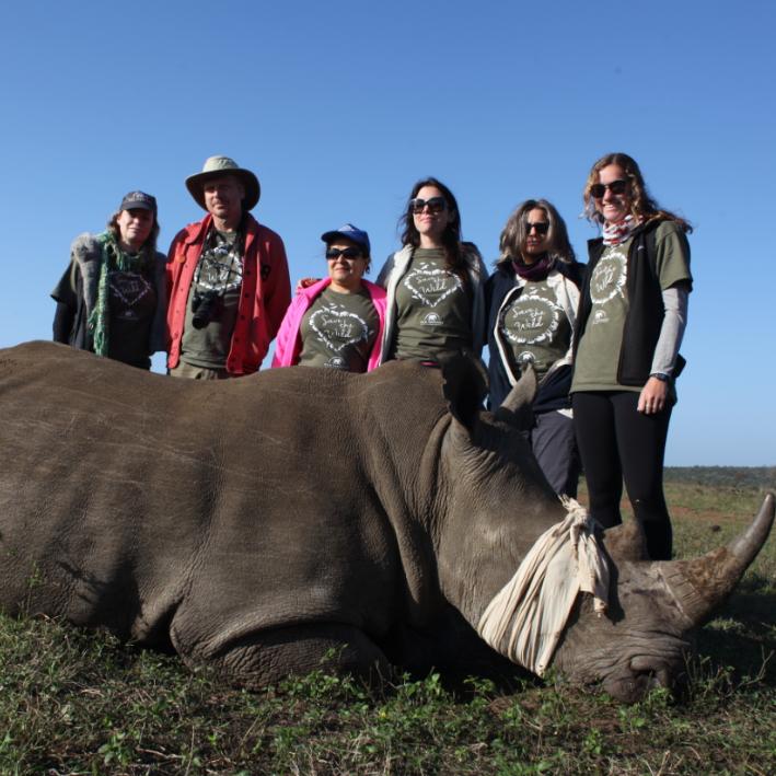 rhino 2.png