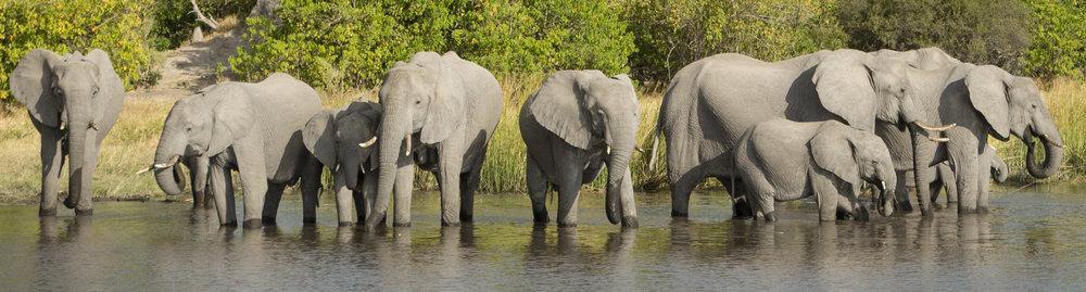 elephant test.jpg