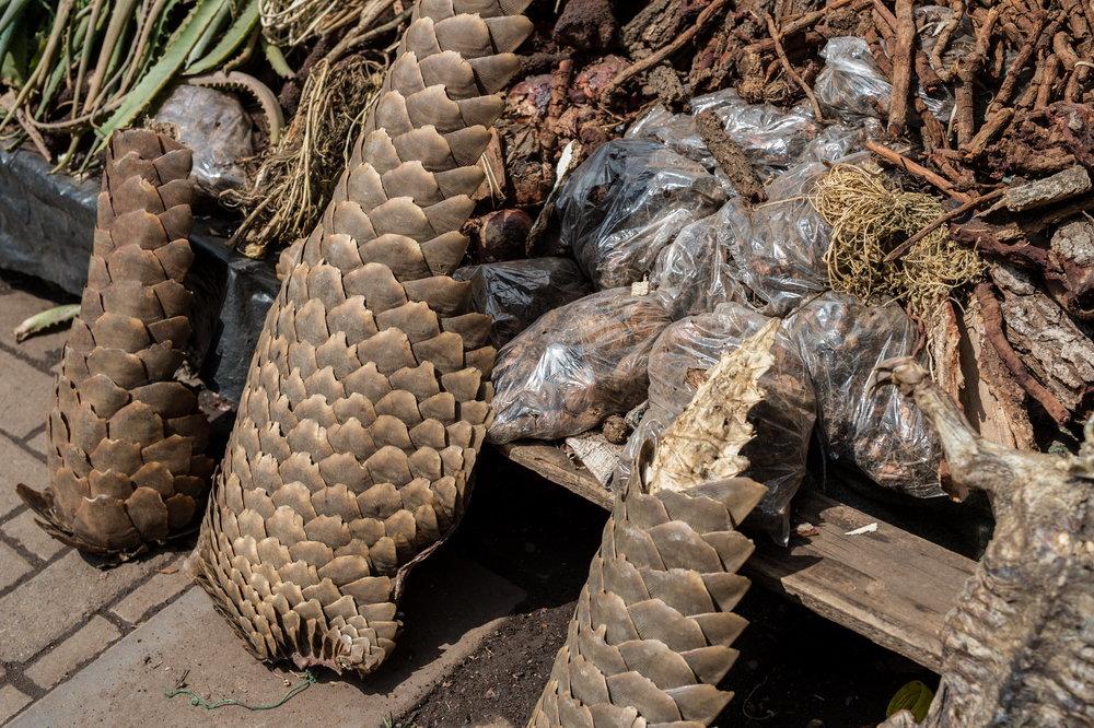 Muti market in Africa selling animal parts.  Photo Credit: Jo-Anne McArthur/WeAnimals/WildScreen Exchange.
