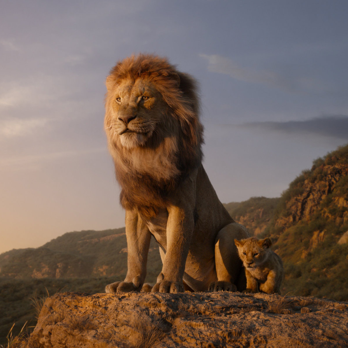 The Lion King For Wildlife Lovers Wild Tomorrow Fund