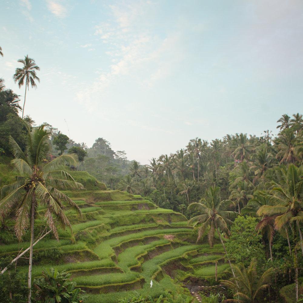 Indonesia-S-7.jpg