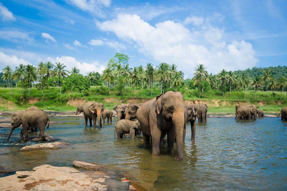 Sri Lanka, 2019