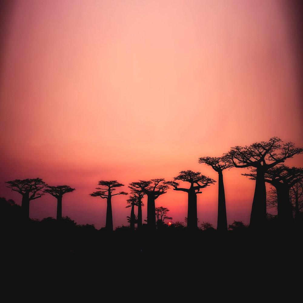 baobabs-2708289_1920 copy.jpg