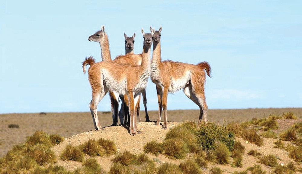 WildlifePatagonia -