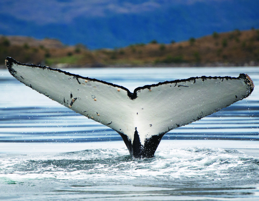 cola ballena 90x70.jpg